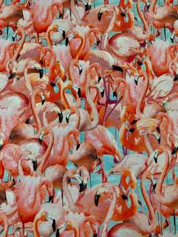 Crowded Flamingo